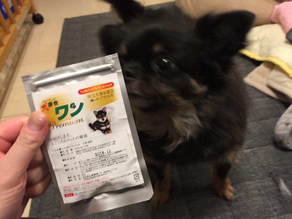 IMG 0985 1024x768 - 犬用の乳酸菌(プロバイオティクス )サプリ・パウダーのおすすめ|死菌が意味ないはウソ!