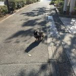 IMG 6009 150x150 - 【店員さん直伝】犬のダイエットフード本気で選ぶなら成分表のここを見ろ!
