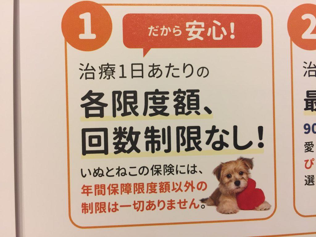 IMG 2260 1024x768 - 日本ペットプラス「いぬとねこの保険」口コミとメリット・デメリットが大幅改善で評価もうなぎのぼり!
