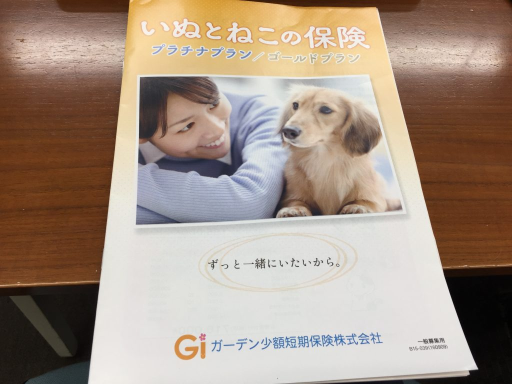 IMG 68901 1024x768 - 【怖いペット保険】慢性疾患(病気)になると更新を断られる保険があるって本当!?