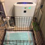 IMG 7412 150x150 - 部屋にしみつく犬の臭いを徹底対策!うんちやおしっこ、ワンちゃん独特の体臭まで。