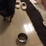犬の餌をプレミアムドッグフードに変えると全く食べなくなる理由とその対処法。