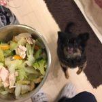 犬の手作りご飯について聞きたいことある?量はざっくりでOK!余りものでゆる~く始めよう。