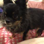 IMG 6268 150x150 - 【犬のホリスティック医療】ほとんどの動物病院がやっている対処療法の弊害とは?