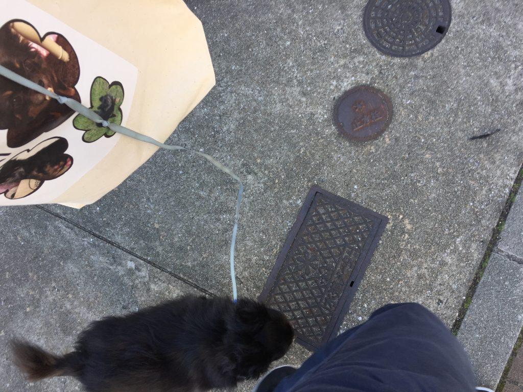 IMG 1074 1024x768 - チワワ君と須磨・板宿のドッグカフェ【リラックス】に行ってきました!