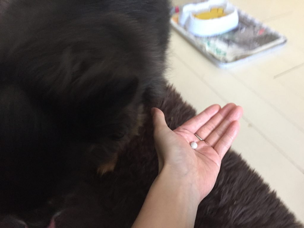 IMG 0033 1024x768 - 田七人参や霊芝、エゾウコギ入りのペットサプリ【犬康食ワンプレミアム】をチワワ君が試してみた!