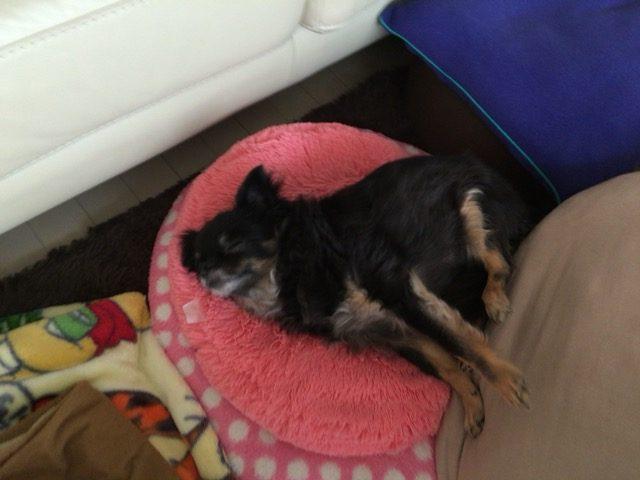 IMG 0718 e1489210705928 - 飼い犬のゴールデンレトリーバーに噛まれて赤ちゃんが亡くなった事件について。