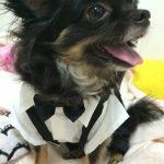 犬の結婚式での衣装はどうする?犬用のおすすめタキシード(スーツ)&ドレスも紹介!