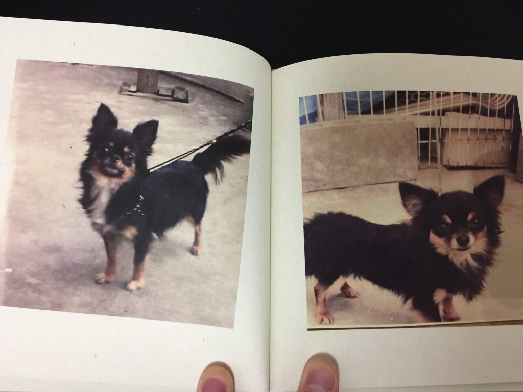 IMG 3145 1 1024x768 - チワワ君との7年間の思い出をアルバムにしてみた!スマホの愛犬との写真をフォトブックで永遠に。