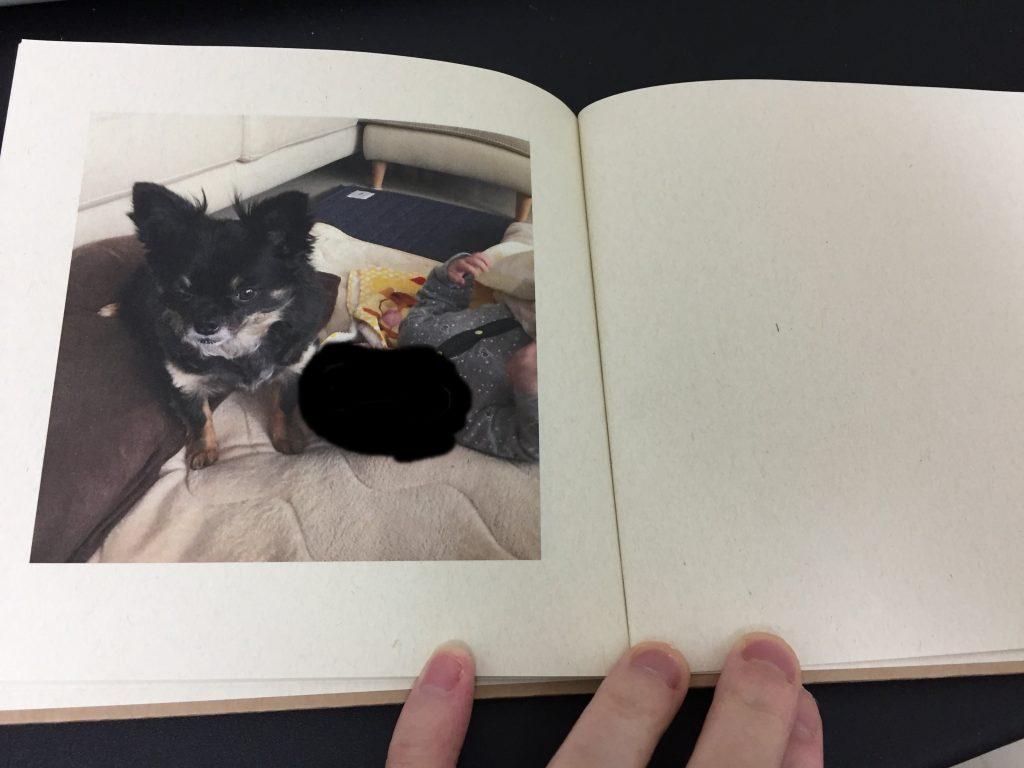 IMG 3417 1024x768 - チワワ君との7年間の思い出をアルバムにしてみた!スマホの愛犬との写真をフォトブックで永遠に。