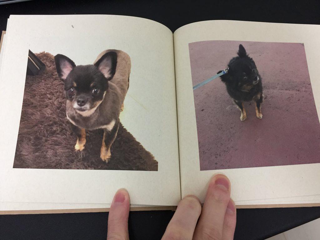 IMG 3418 1024x768 - チワワ君との7年間の思い出をアルバムにしてみた!スマホの愛犬との写真をフォトブックで永遠に。