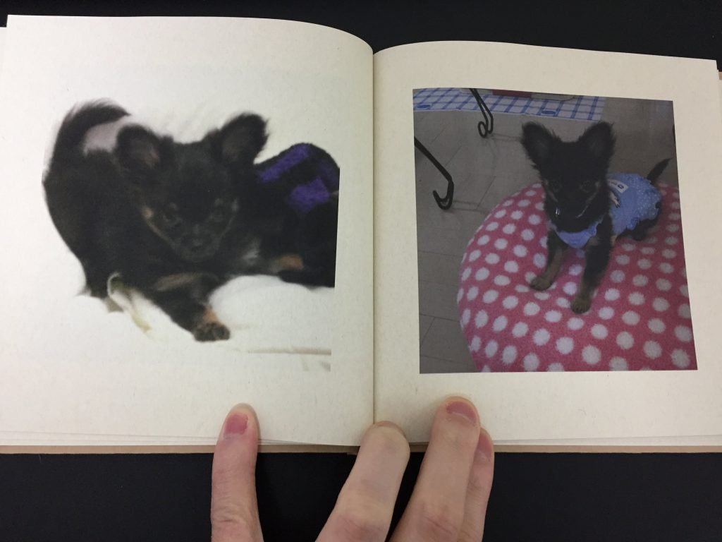 IMG 3421 1024x768 - チワワ君との7年間の思い出をアルバムにしてみた!スマホの愛犬との写真をフォトブックで永遠に。