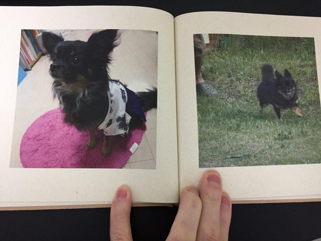 IMG 3422 1024x768 - チワワ君との7年間の思い出をアルバムにしてみた!スマホの愛犬との写真をフォトブックで永遠に。