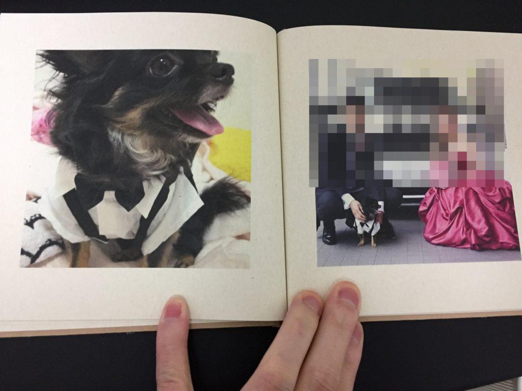 IMG 3423 1024x768 - チワワ君との7年間の思い出をアルバムにしてみた!スマホの愛犬との写真をフォトブックで永遠に。
