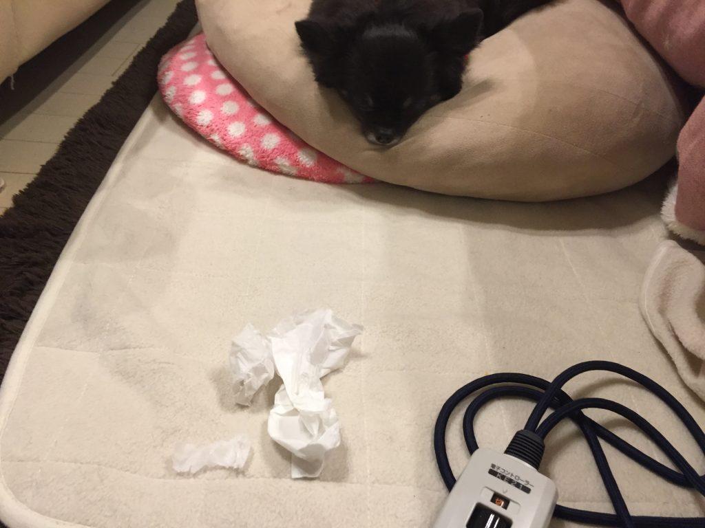 IMG 6749 1024x768 - 飼い犬のゴールデンレトリーバーに噛まれて赤ちゃんが亡くなった事件について。