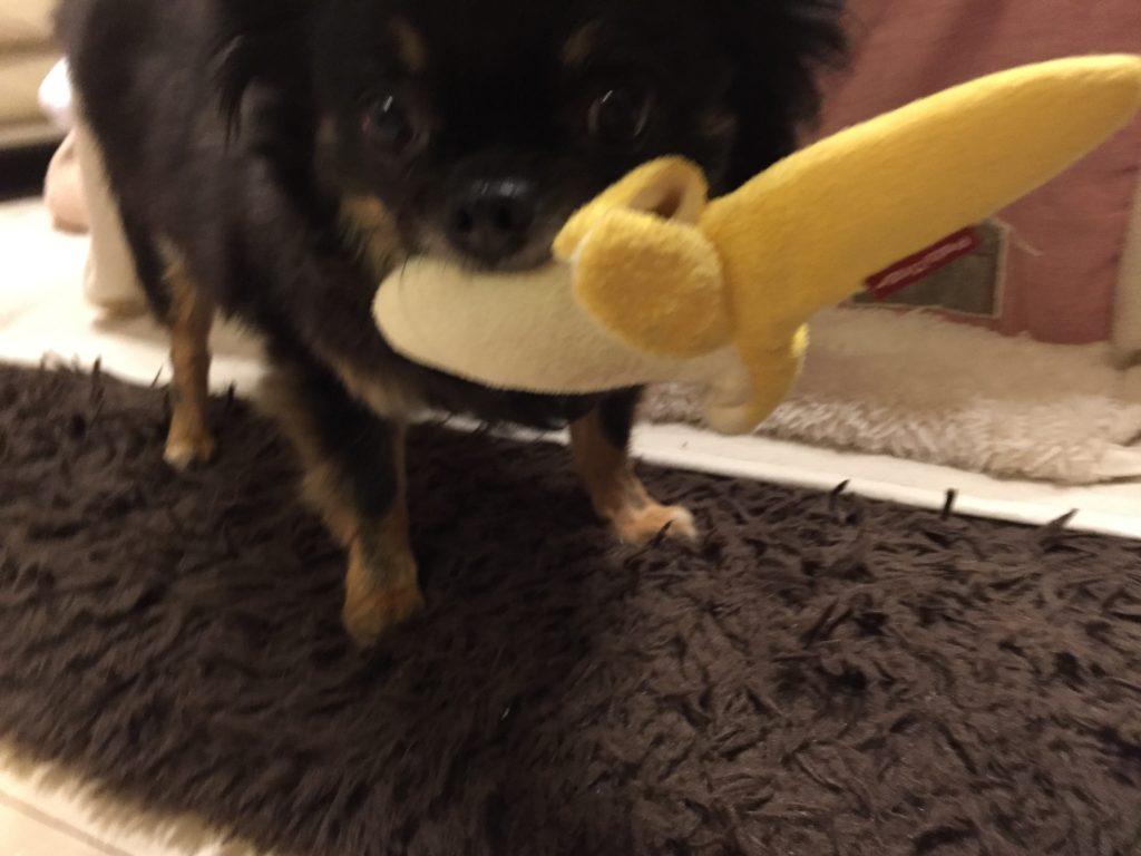 IMG 8740 1024x768 - 飼い犬のゴールデンレトリーバーに噛まれて赤ちゃんが亡くなった事件について。