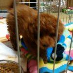 IMG 9136 150x150 - 小型犬(プードル・チワワ)におすすめの丈夫な【ぬいぐるみ】のおもちゃまとめ