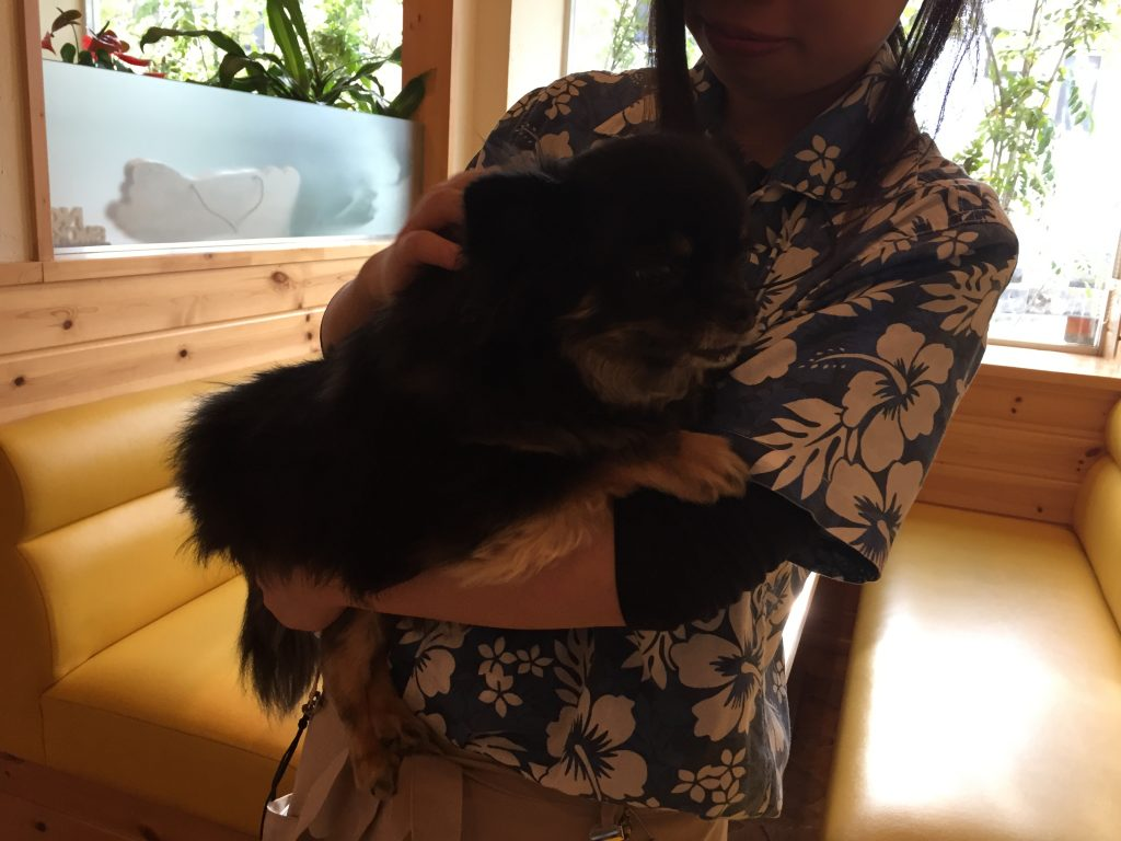 IMG 3750 1024x768 - ハワイアンドッグカフェAkala(アカラ)@神戸市 伊川谷に行ってきました!