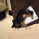 IMG 0327 150x150 - 犬用のDHAサプリの人気製品まとめ&愛犬に合わせたおすすめの選び方。
