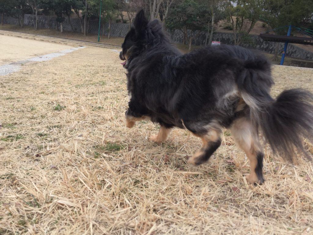 IMG 2553 1024x768 - シニア犬・高齢犬など老化が気になるワンちゃんにおすすめのサプリメント。