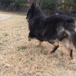 IMG 2553 150x150 - 犬のダイエットで運動・お散歩をさせるときに私が気を付けていること。