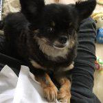【経過報告】うちの犬がおからダイエットに挑戦して一か月が経ちました!