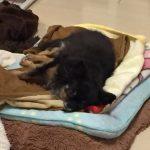 シニア犬・高齢犬など老化が気になるワンちゃんにおすすめのサプリメント。