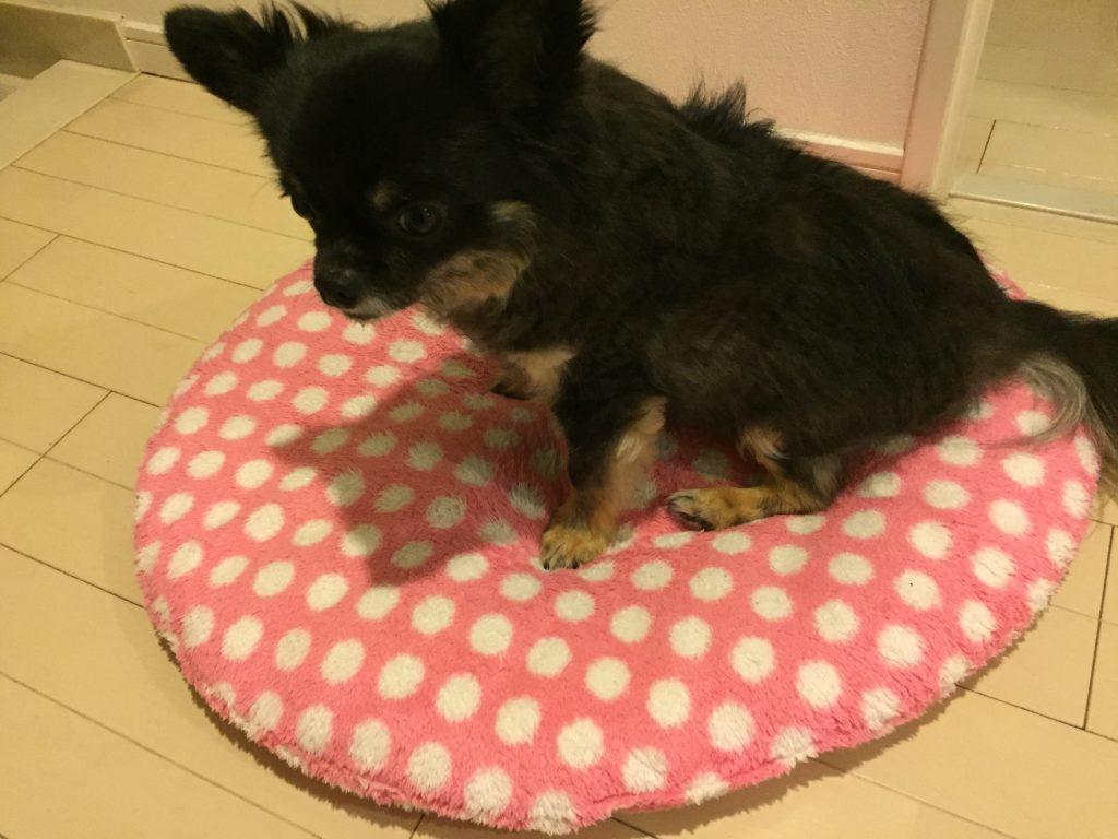 IMG 76101 1024x768 - 【実体験】犬の夏バテ・熱中症対策と不安や疑問点を獣医さんに聞いてみた!