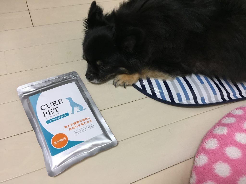 IMG 7670 1024x768 - シニア犬・高齢犬など老化が気になるワンちゃんにおすすめのサプリメント。