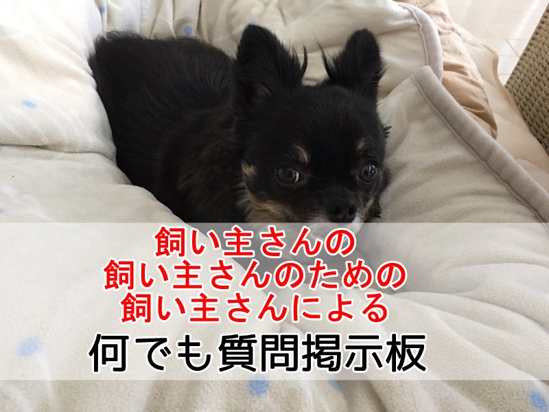 situmou - 飼い主さんのための何でも質問掲示板(※誰でも質問、回答可能です。)