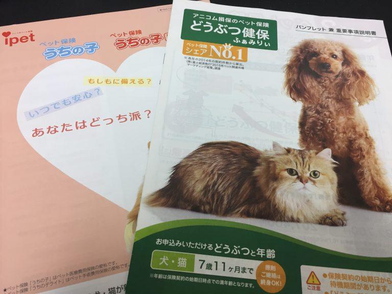 IMG 07331 768x576 - 猫のペット保険はどこがいい?各社の比較や口コミからおすすめの保険選びのお手伝い。