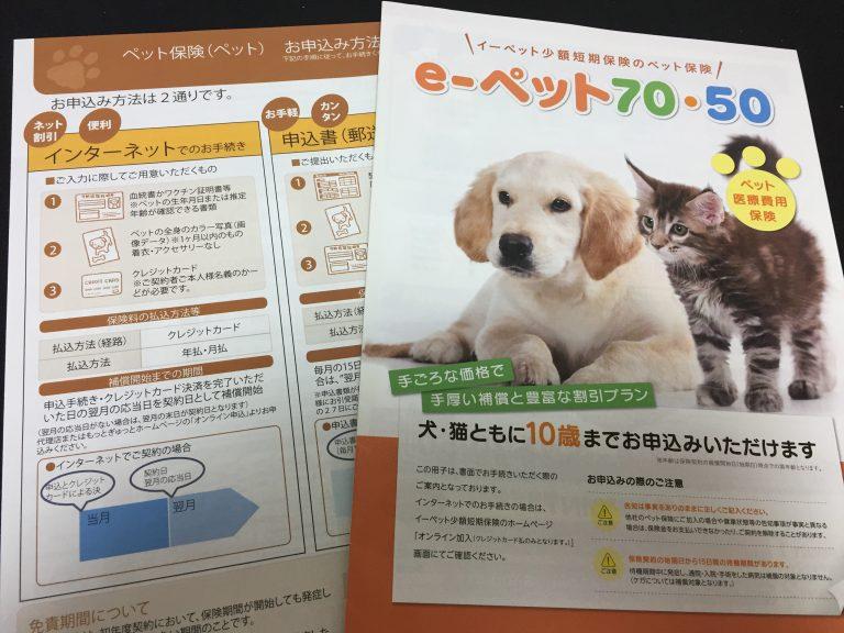 IMG 91061 768x576 - 猫のペット保険はどこがいい?各社の比較や口コミからおすすめの保険選びのお手伝い。