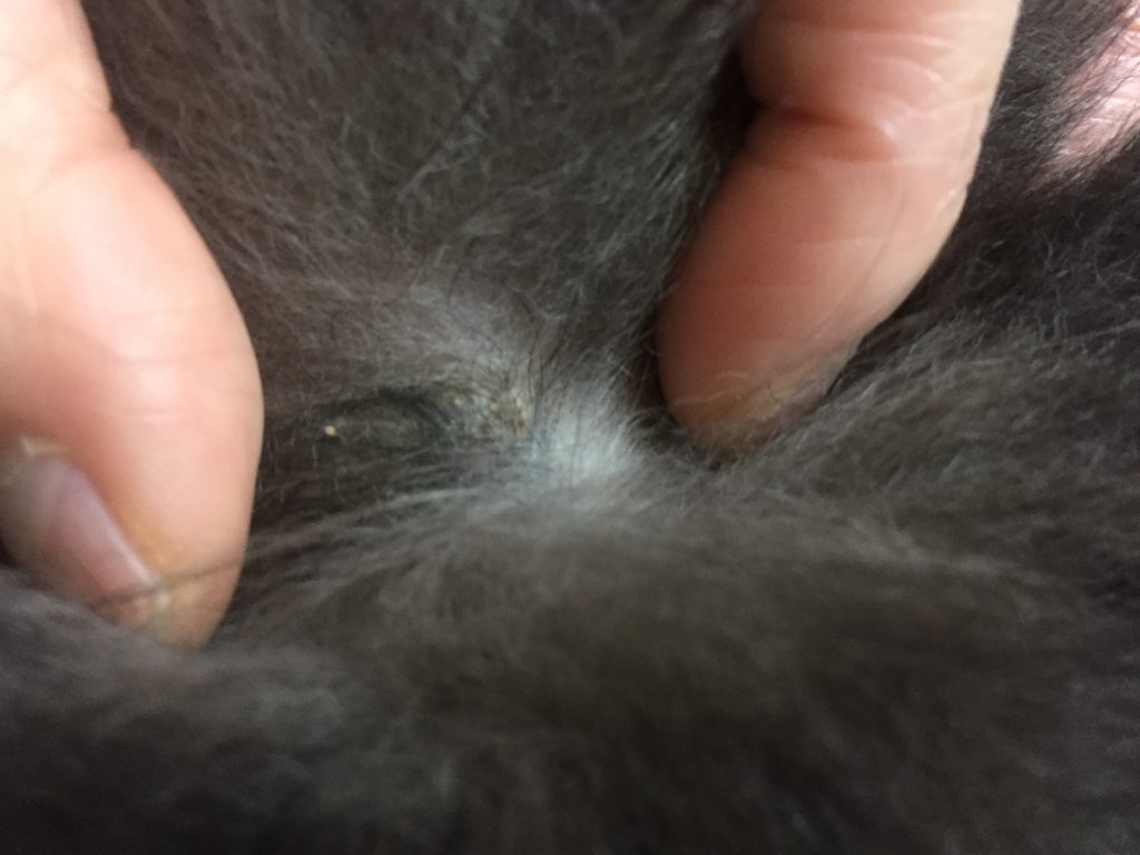 image2 1024x768 - 犬の背中にイボ?かさぶた?のようなしこりができてる!獣医さんに診てもらってきた。