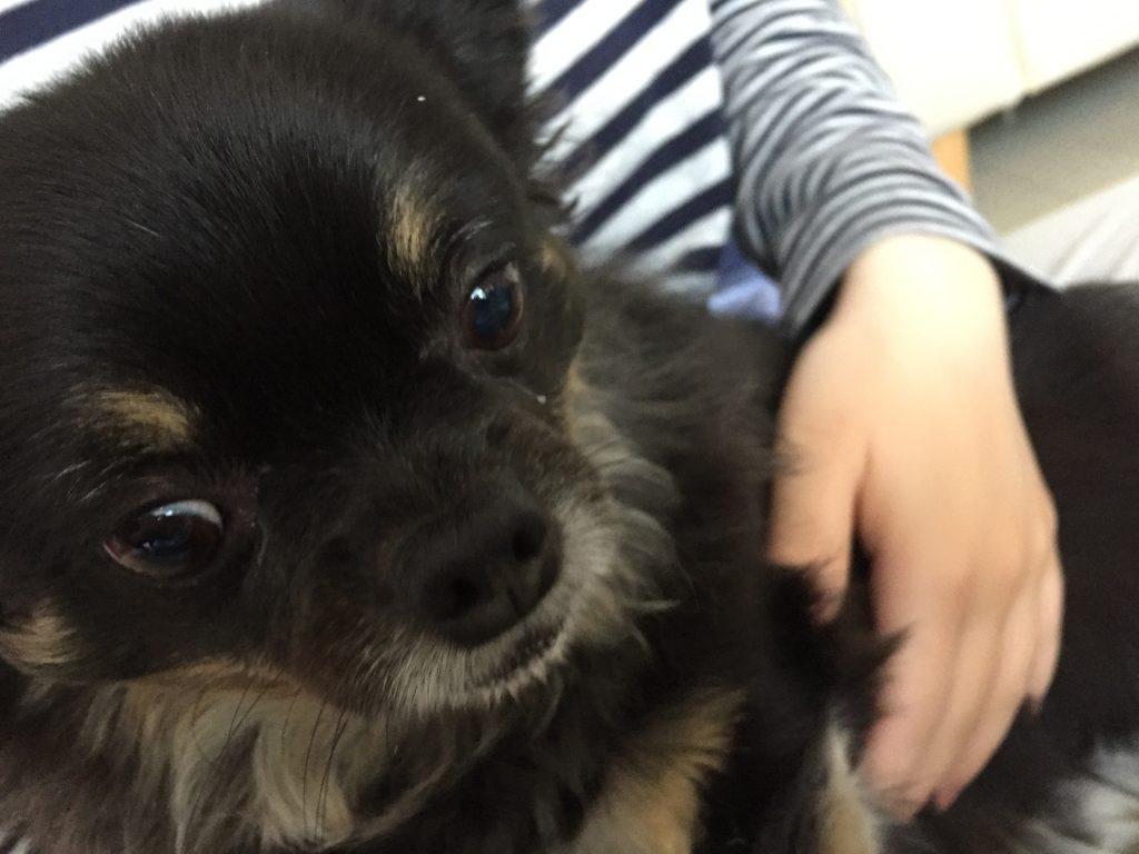 IMG 0929 1024x768 - 湿疹?くしゃみ?犬アレルギー&アトピー持ちがワンコに接した時の症状と対処法
