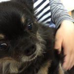 IMG 0929 150x150 - 湿疹?くしゃみ?犬アレルギー&アトピー持ちがワンコに接した時の症状と対処法