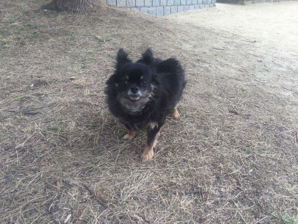 IMG 0637 1024x768 - 犬が尿路結石になったら(もしくは予防にも)散歩はさせるべき?させないべき?